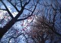 SMENA 8M『梅まつり2011 その1』3
