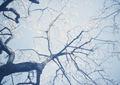 SMENA 8M『梅まつり2011 その1』4