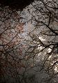 SMENA 8M『梅まつり2011 その1』5