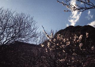 SMENA 8M『梅まつり2011 その3』4