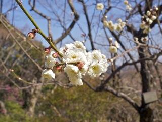 E-520百草園梅_09.jpg