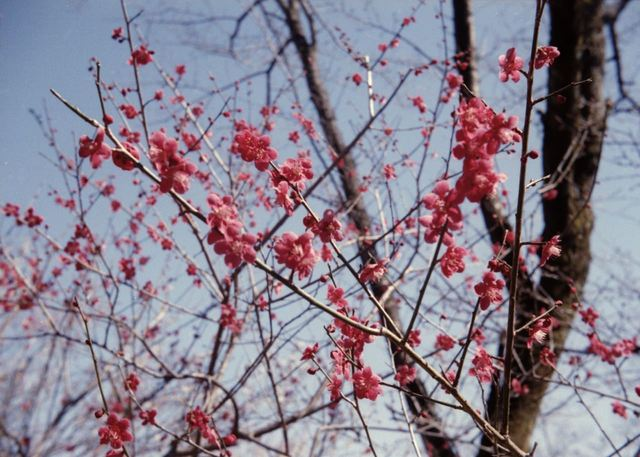 babysem『むちむちぴかぴか梅祭り 2』-6