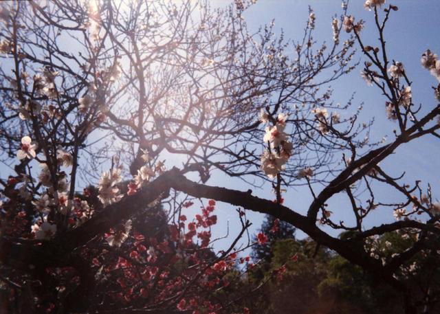 babysem『むちむちぴかぴか梅祭り 1』-4