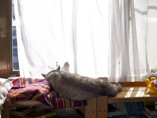 necobitterの猫ら写真まとめ 2012.02_Olympus E-520-2