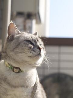 necobitterの猫ら写真まとめ 2012.02_Olympus E-520-3