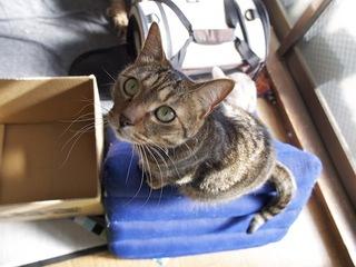 necobitterの猫ら写真まとめ 2012.02_Olympus E-520-1