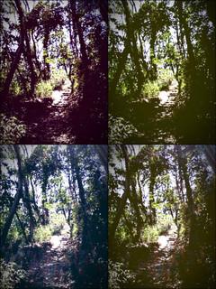 iPod touch『百草園へのもう一つの道』-9