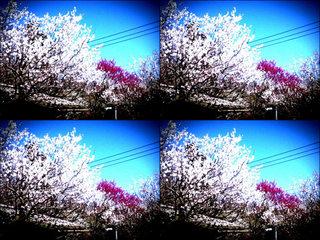 iPod touch『百草園へのもう一つの道』-13