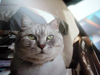 TOLOTで猫らアルバム作ったぞー-5.JPG