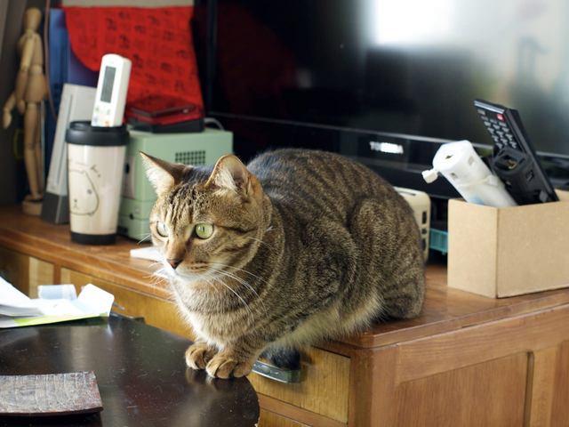 necobitterの猫ら写真まとめ 2012.03_E-520-2
