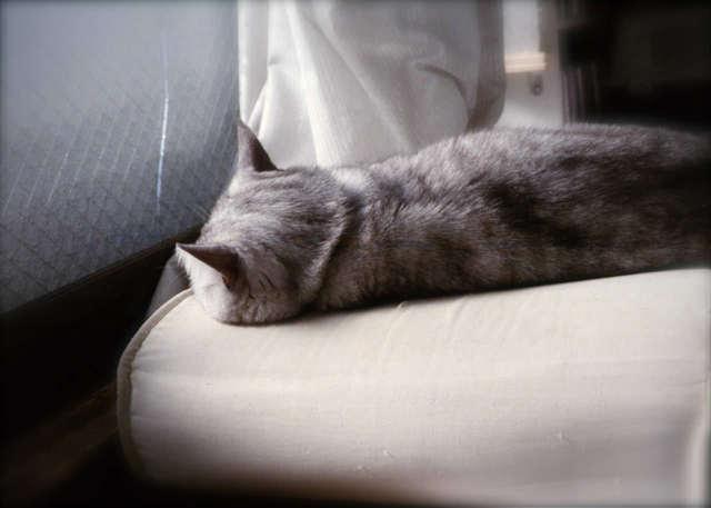 necobitterの猫ら写真まとめ 2012.03_KLASSE S