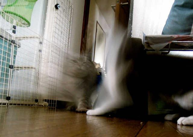 necobitterの猫ら写真まとめ 2012.03_Nikon P300-1