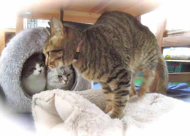 necobitterの猫ら写真まとめ 2012.03_Nikon P300-2