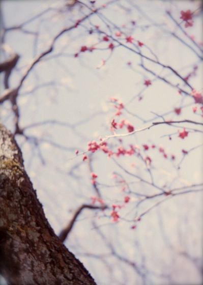 babysem『むちむちぴかぴか梅祭り 3』2