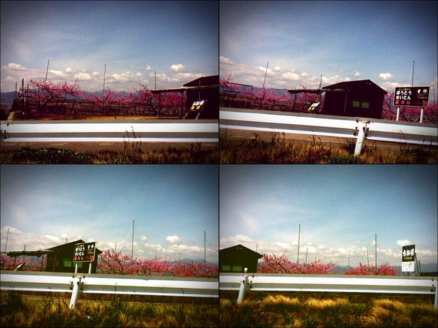 iPod touch『やまなし桃花見2012 その1』-5