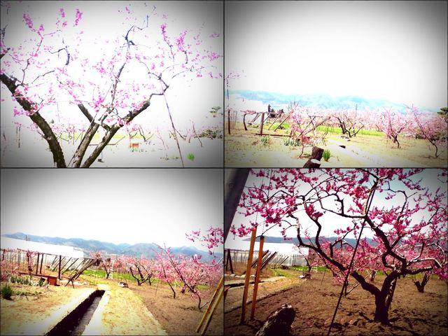 iPod touch『やまなし桃花見2012 その1』-6
