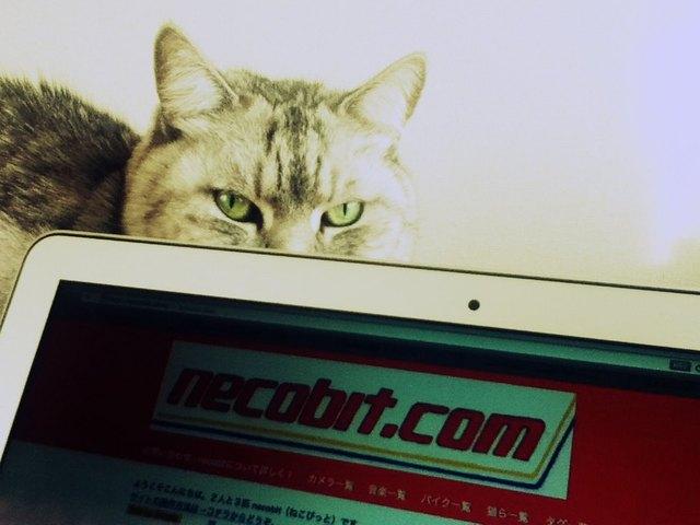 necobitterの猫ら写真まとめ 2012.03_iPod touch-2