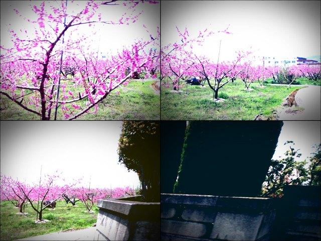 iPod touch『走り撮り!やまなし桃花見2012 その2』-1.JPG