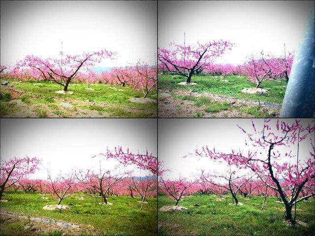 iPod touch『走り撮り!やまなし桃花見2012 その2』-2.JPG