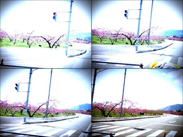 iPod touch『走り撮り!やまなし桃花見2012 その2』-3.JPG