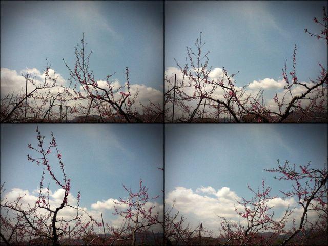 iPod touch『走り撮り!やまなし桃花見2012 その2』-4.JPG
