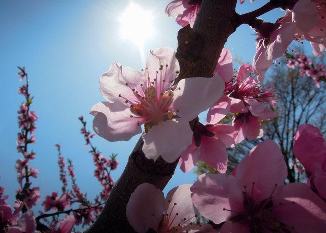 Nikon P300『花盛りフルーツ公園 その1』-1.jpg