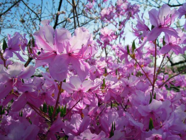 Nikon P300『花盛りフルーツ公園 その1』-2.jpg