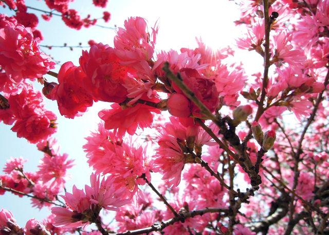 Nikon P300『花盛りフルーツ公園 その1』-3.jpg