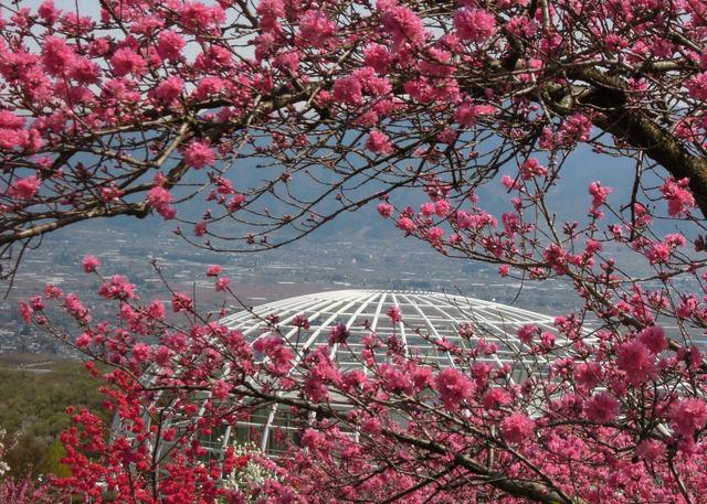 Nikon P300『花盛りフルーツ公園 その1』-4.jpg