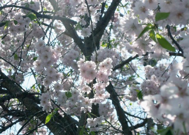 Nikon P300『花盛りフルーツ公園 その1』-5.jpg