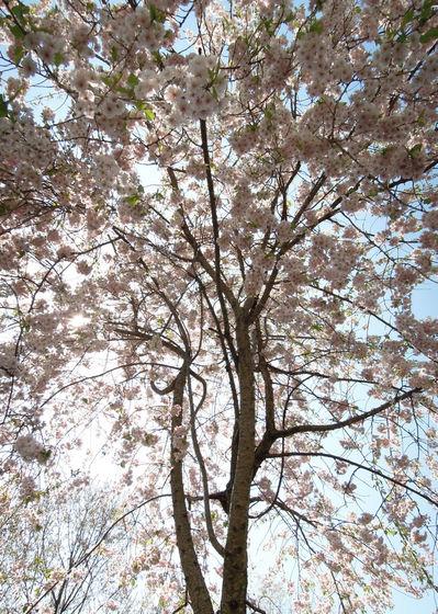 Nikon P300『花盛りフルーツ公園 その1』-6.jpg