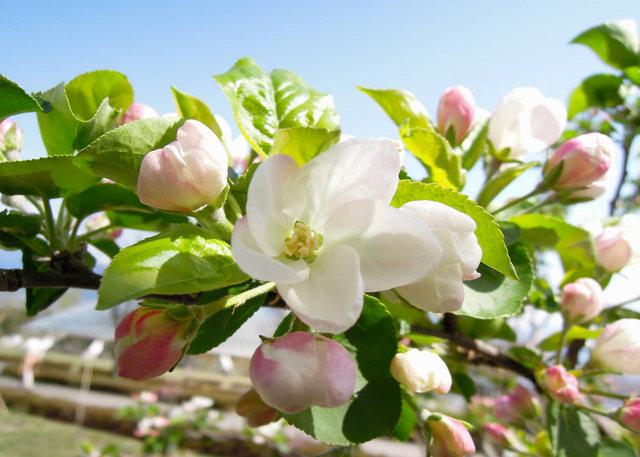 Nikon P300『花盛りフルーツ公園 その1』-8.jpg