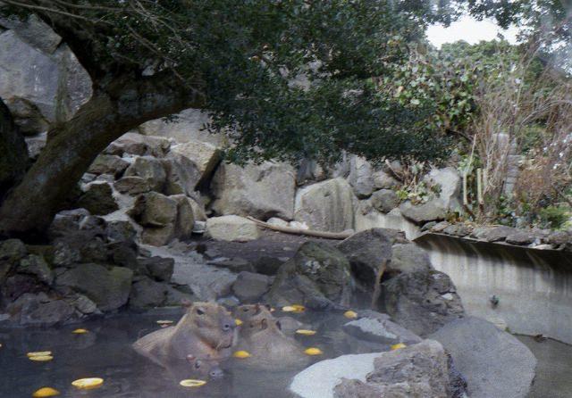 smena8m_20060218izu-11