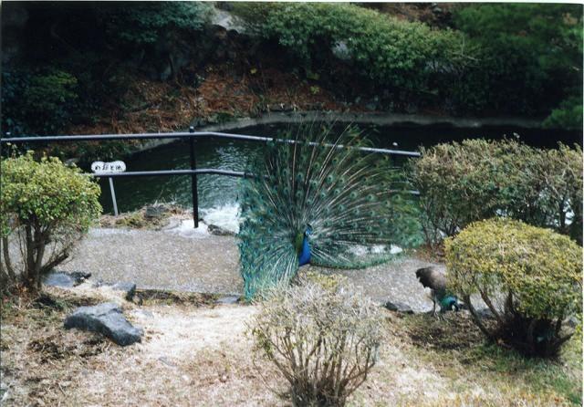 smena8m_20060218izu-26