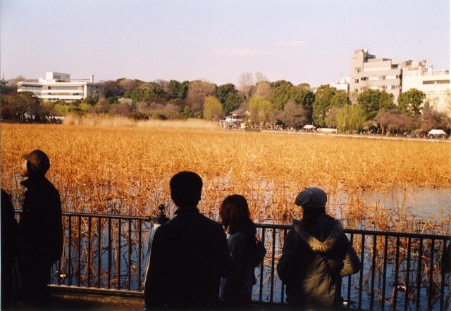 smena8m_20060325shinobazu-06