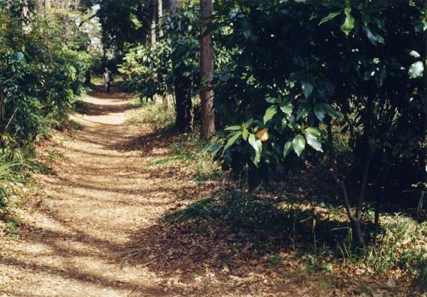 smena8m_20060331_kapi-06