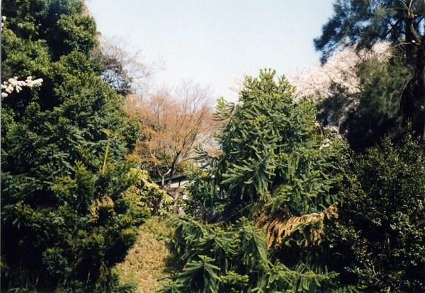 smena8m_20060331koishikawa-02