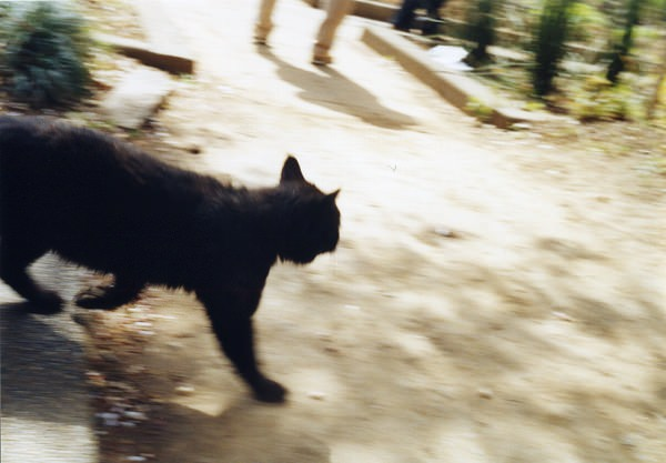 smena8m_20060331koishikawa-10