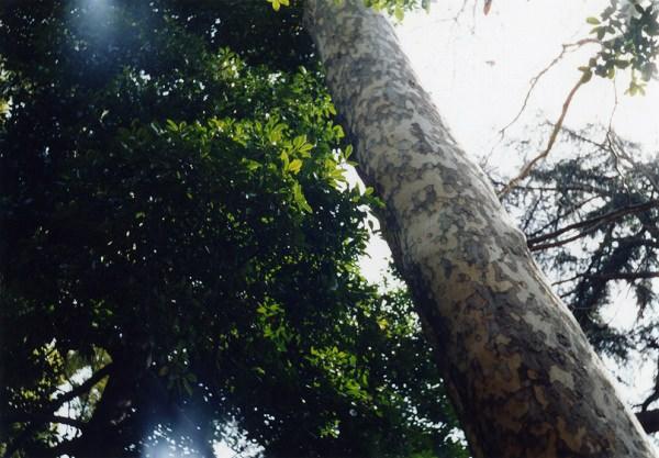 smena8m_20060331koishikawa-14