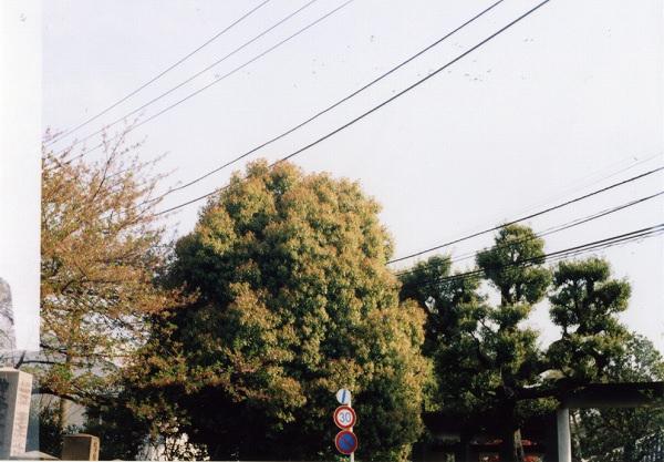 smena8m_20060416yanaka-01