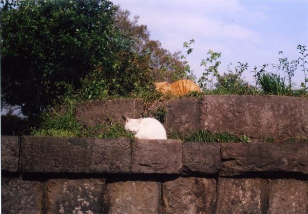 smena8m_20060416yanakaneko-05