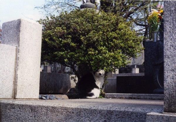 smena8m_20060416yanakaneko-09