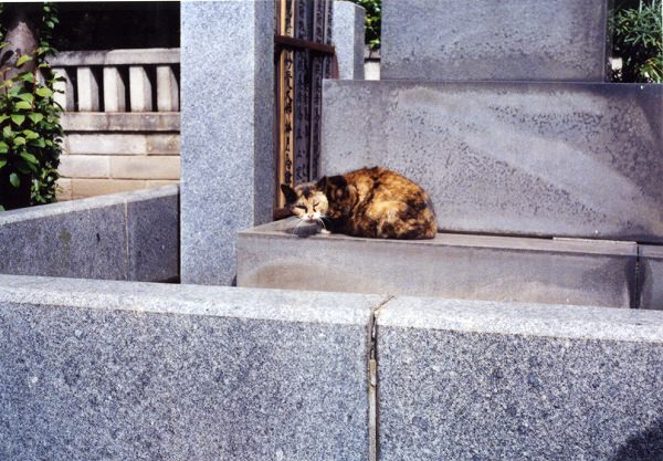 smena8m_20060416yanakaneko-16