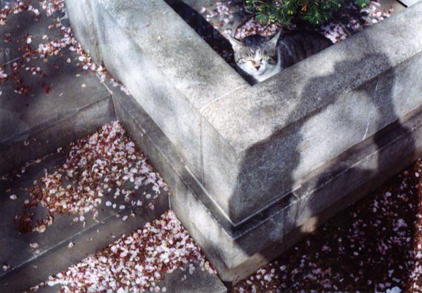 smena8m_20060416yanakaneko-17