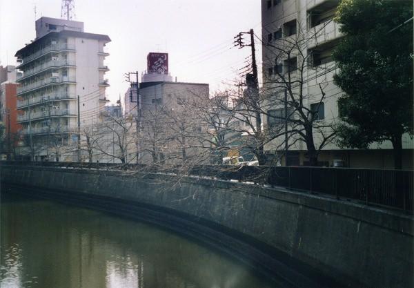 smena8m_20060505sakura-04
