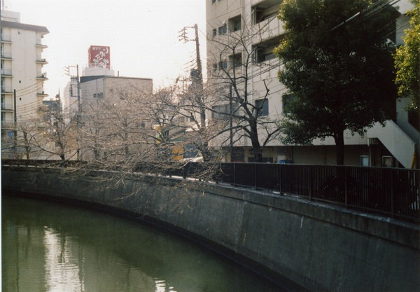 smena8m_20060505sakura-05