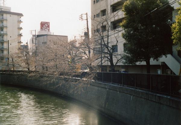 smena8m_20060505sakura-06