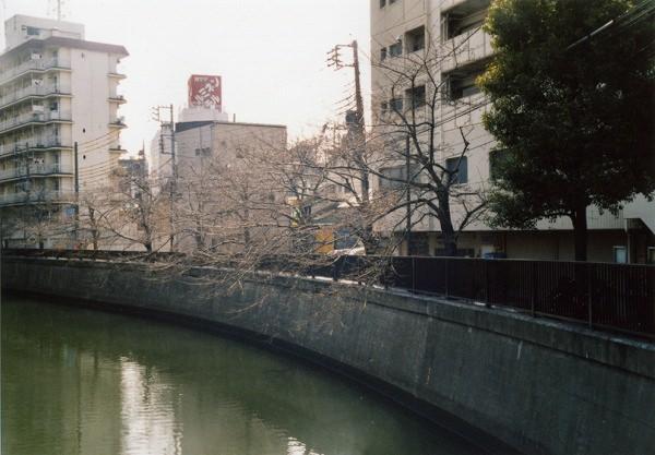 smena8m_20060505sakura-07