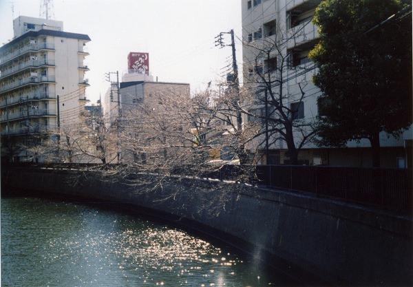 smena8m_20060505sakura-09