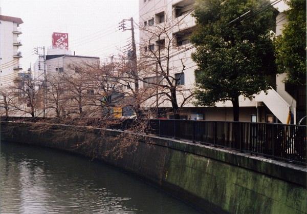 smena8m_20060505sakura-10